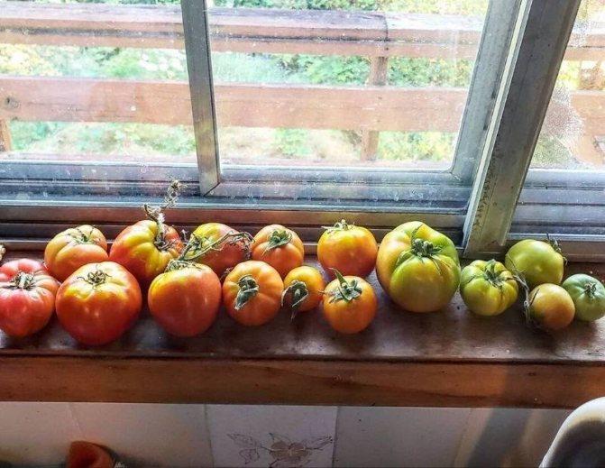 Дозревание сорванных овощей и фруктов в домашних условиях